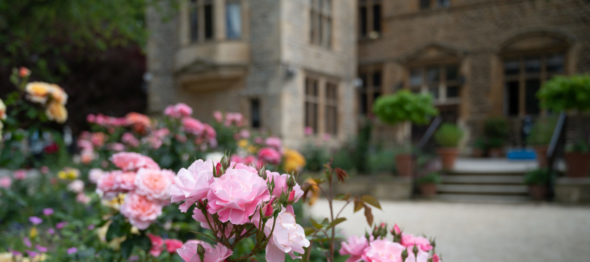 Rose garden Magdalen College School Oxford
